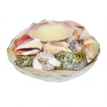 Echte Muscheln in dekorativem Korb